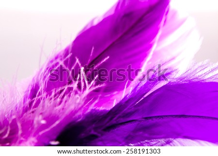 Close-up of feather with light on background. - stock photo