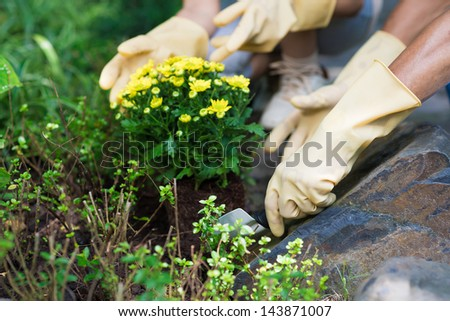 Close-up of female hands planting and cultivating flowers in the garden - stock photo