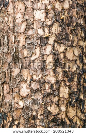 Close up of Fir Tree Bark - stock photo