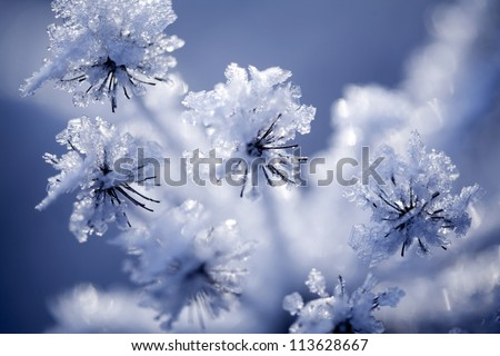 Close up of flower covered with ice and snow - stock photo