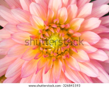 Close up of flower for background or texture. - stock photo