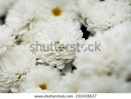 Close up of flower, shallow DOF artistic toned photo or nature background with space for text - stock photo