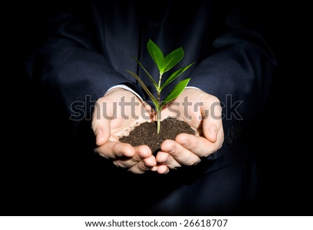 Close-up of fresh branch with leaves in soil held by a human - stock photo