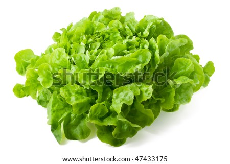 Close up of fresh butter-head lettuce isolated on white background - stock photo
