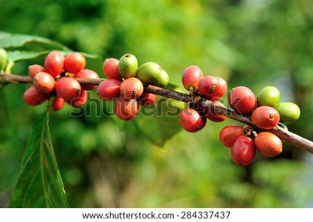 Close up of fresh coffee beans, selective focus.  - stock photo