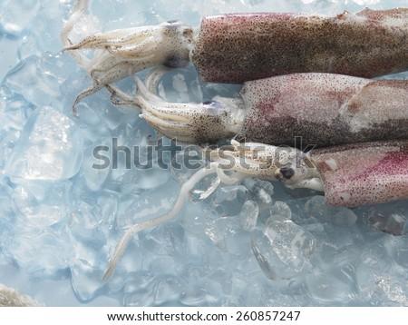 close up of fresh cuttlefish on ice - stock photo