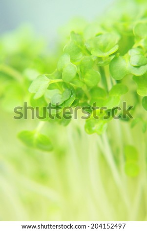 Close up of fresh garden cress leaves - stock photo