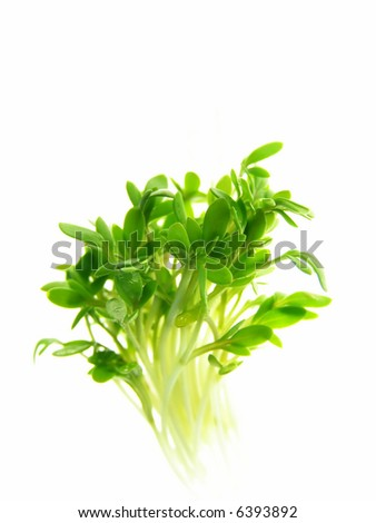 Close-up of fresh green delicate cress petals against white background - stock photo