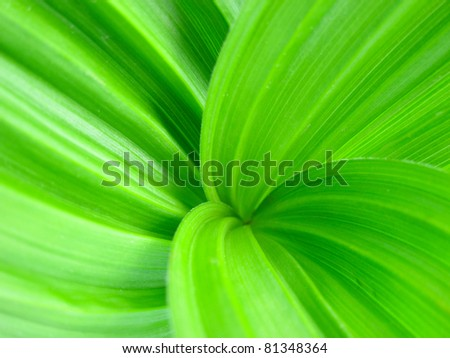 Close-up of fresh green grass - stock photo