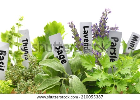 Close up of fresh herbs with name tags  - stock photo