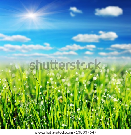 Close up of fresh morning dew on spring grass with blue sky - stock photo