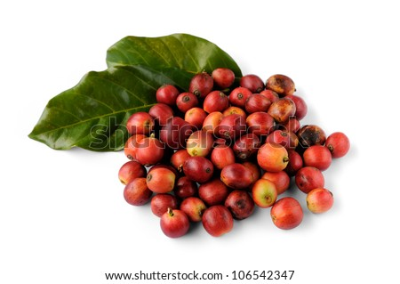 Close up of fresh raw coffee beans isolated on white background, selective focus. - stock photo