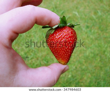 Close up of fresh Strawberry being held with a grass background.  - stock photo