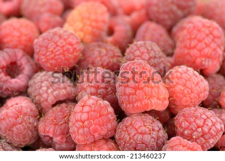 Close-up of freshly picked ripe raspberries - stock photo
