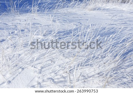 close-up of frost on a dry grass in a field in winter frosty day - stock photo