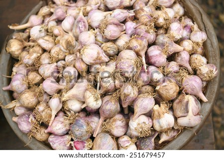 close up of garlic on market stand - stock photo