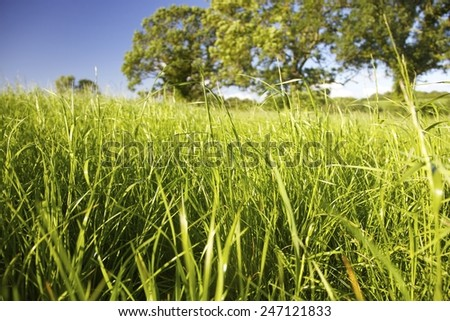 Close-up of grass and trees in a summer meadow. - stock photo