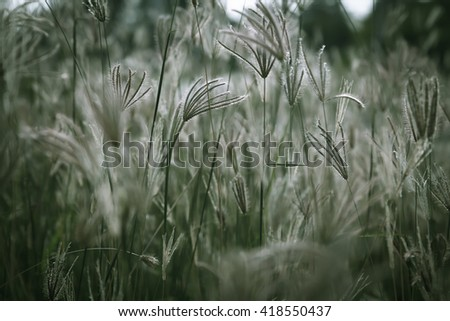 Close up of grass field in the morning, shallow dept of field and soft focus process, natural background - stock photo