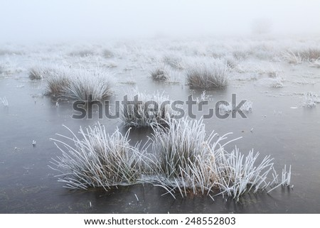 Close up of grass with hoar frost on a misty winter day - stock photo
