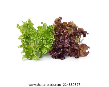 close up of green and red lettuce isolated on white background - stock photo