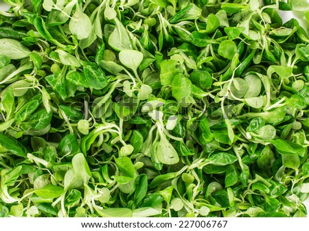 Close up of green fresh basil. Whole background. - stock photo