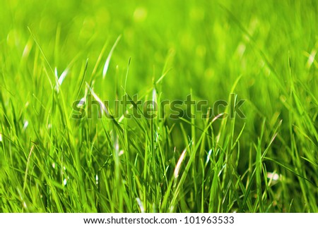 Close up of green grass - stock photo