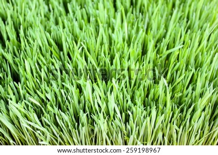 Close up of green grass leaves foliage. - stock photo
