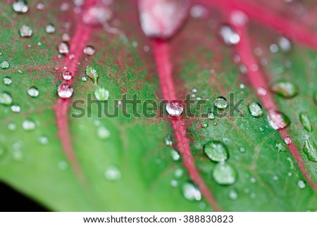 Close up of green leaf with glistening raindrops - stock photo