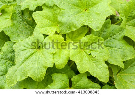 Close-up of green plant leaf water drops - stock photo