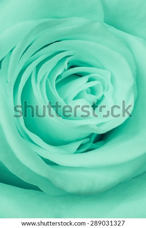 close up of green rose petals - stock photo