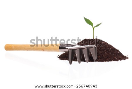 Close-up of green seedling growing out of soil isolated on white background - stock photo