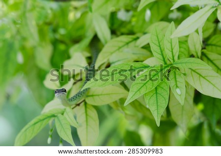 close up of green snake on leave in nature garden. - stock photo