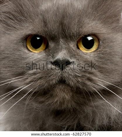 Close up of grey cats face - stock photo