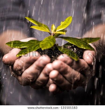 Close up of hands holding seedling and soil growing in the rain - stock photo
