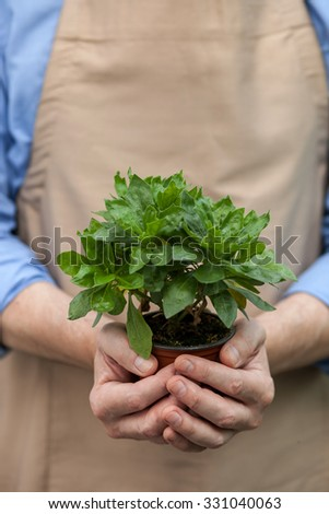 Close up of hands of garden worker holding flowerpot. The man is standing in apron - stock photo