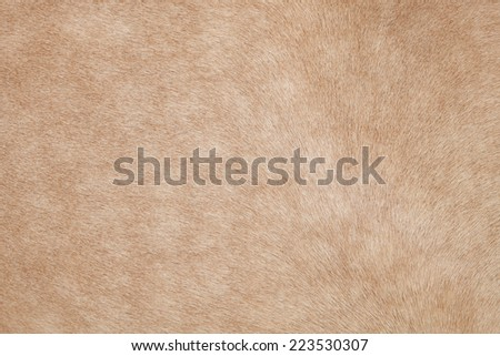 close up of horse hair,fur, skin, leather use as animals and natural background ,backdrop - stock photo
