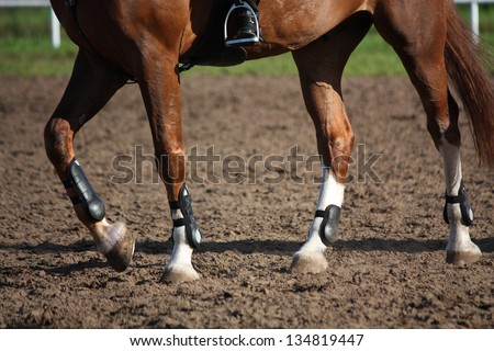 Close up of horse legs with protection boots during riding lesson - stock photo