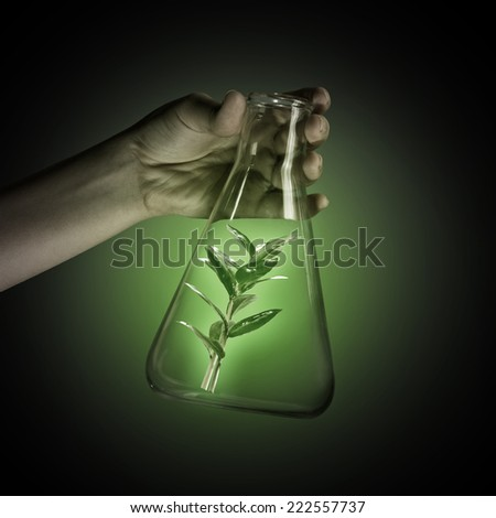 Close up of human hand holding test tube with green sprout - stock photo