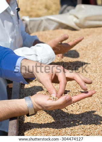Close up of human hands checking wheat grain in trailer after harvest in the field - stock photo