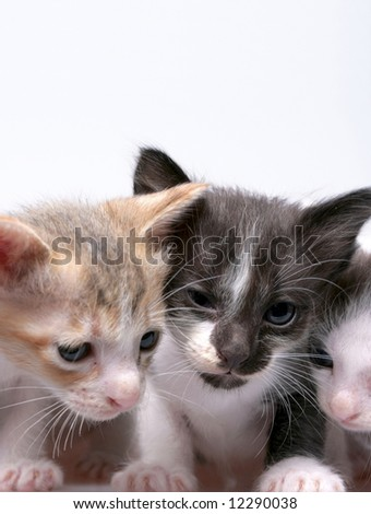 Close up of kittens isolated on white background - stock photo