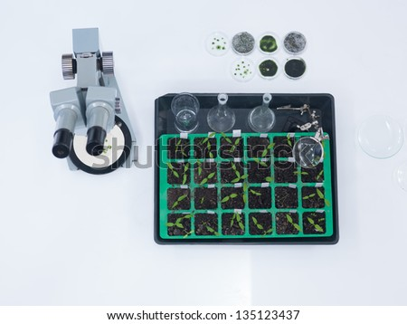 close-up of laboratory tools and seedlings on a worktable in a chemistry lab - stock photo