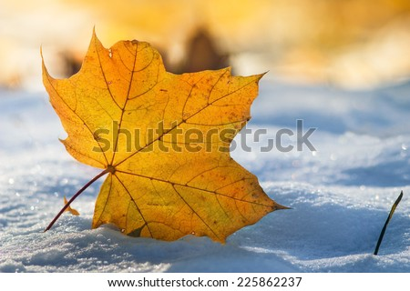 Close-up of  leaf on the first snow in bright sunshine. Park in Autumn.   - stock photo