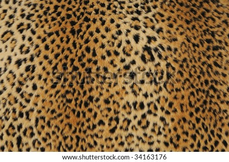 close-up of leopard skin, use as background - stock photo