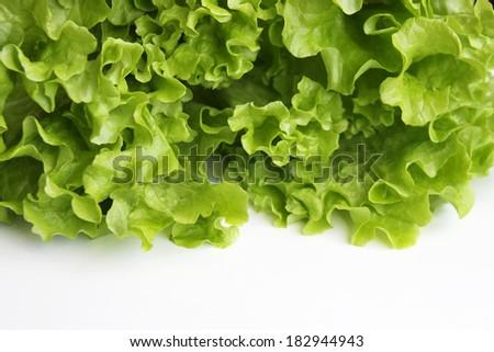 Close up of lettuce on white background - stock photo