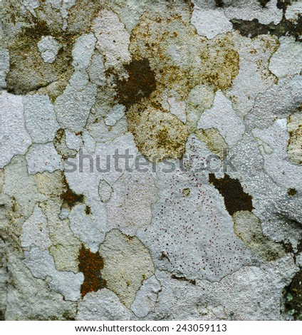 Close up of  lichen on the rocks - stock photo