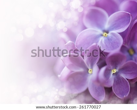 Close-up of lilac on colorful background - stock photo