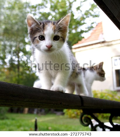 Close-up of little cat - stock photo