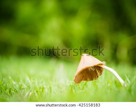 Close up of little mushroom look like umbrella with dew in garden on the sunlight morning, Shallow depth of field, Copy Space, Side View - stock photo