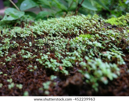 Close up of little plant on the ground in raining day - stock photo