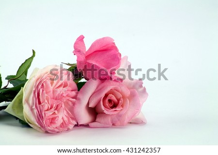 close up of little posy of pink roses isolated - stock photo
